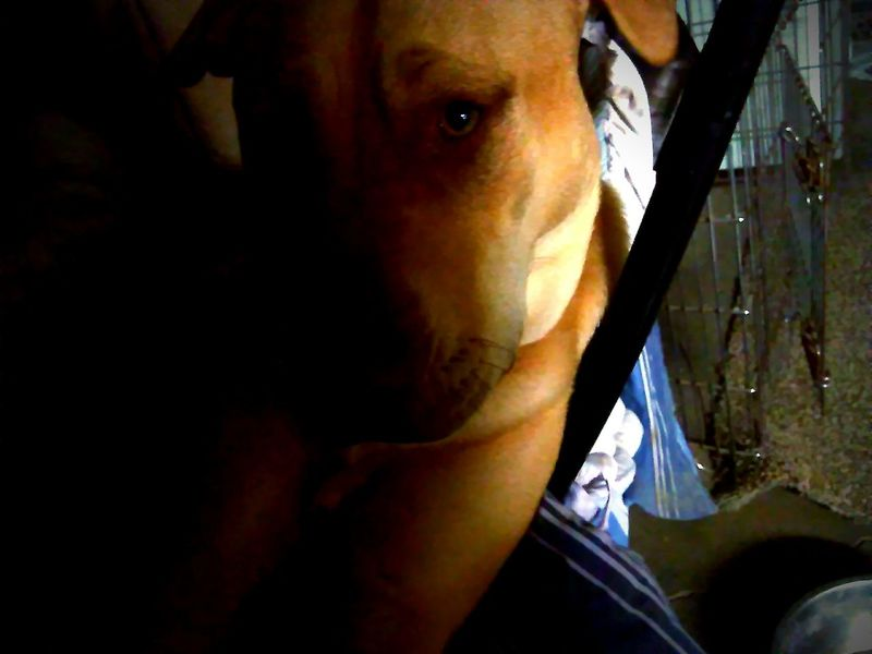 Hanging Out Taking Photos Turn Your Lights Down Low Mansbestfriend Rednose Pitbull Companion Dog