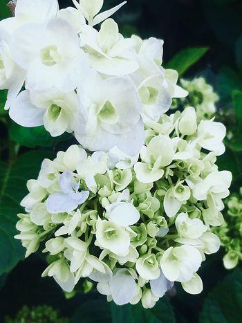 Flowered Flowering Plant Flower Vulnerability  Fragility Petal Freshness Plant