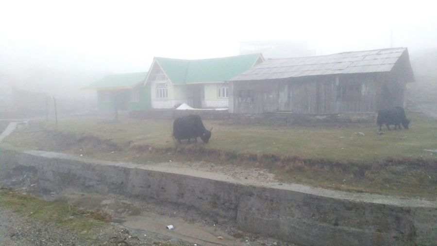 An afternoon in Gnathang valley Gnathang Valley Sikkim Mountain Fog Rural Scene Agriculture Architecture Building Exterior Built Structure