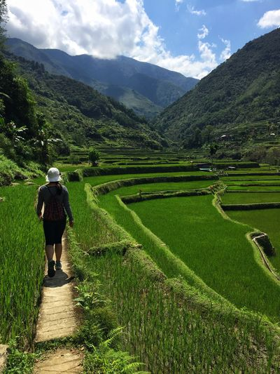 Rice terrasse Rice Agriculture Farm Field Growth Working Farmer Cultivated Land Landscape Mountain