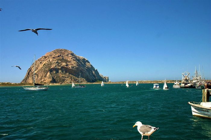 Clear skies ahead! With the company of a few friends. Enjoy. Harbor Animals In The Wild Animal Themes Bird One Animal Sea Animal Wildlife Seagull Clear Sky Day Rock - Object Mountain Mid-air Scenics Flying Spread Wings Nature Outdoors California Dreamin