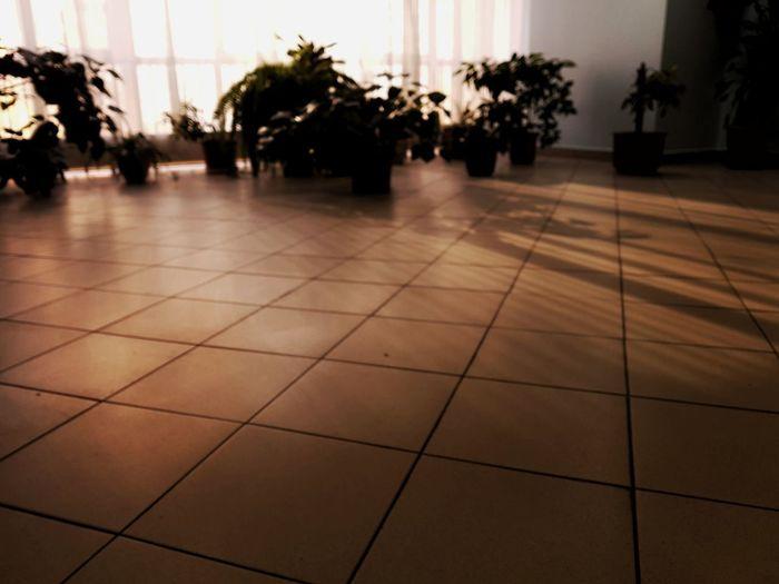 Sunlight falling on tiled floor