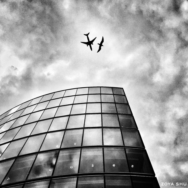 Welcome To Black London Flying Sky Low Angle View Building Exterior No People Architecture Airplane Outdoors Animal Themes Modern Modern Architecture Cool Beautiful Bird Jetlag Streetphotography Iphoneonly Luckyshot Flying Bird Flying High Travel Travelling Tourism Long Goodbye Welcome To Black