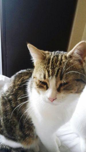 Chez Fabien ❤️ Mon Chat  Pets Cute Pets Cute Cats Bubble ❤️ Mon Deuxième Chat ❤️