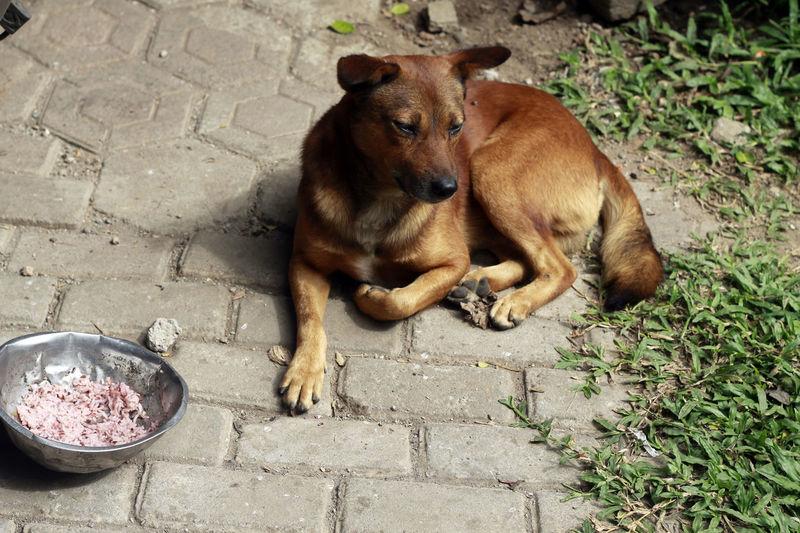 Anjing Kampung Dog Eat Dog Dog Eat Meal Dog Eating Carrot Dog Indonesia Dog Lover Feeding Dogs Won't Eat