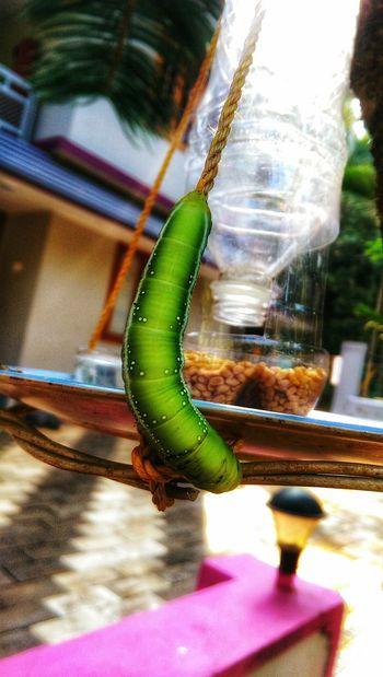 Caterpillar Beauty In Nature Catterpillar Green Color Eye Nature Freshness