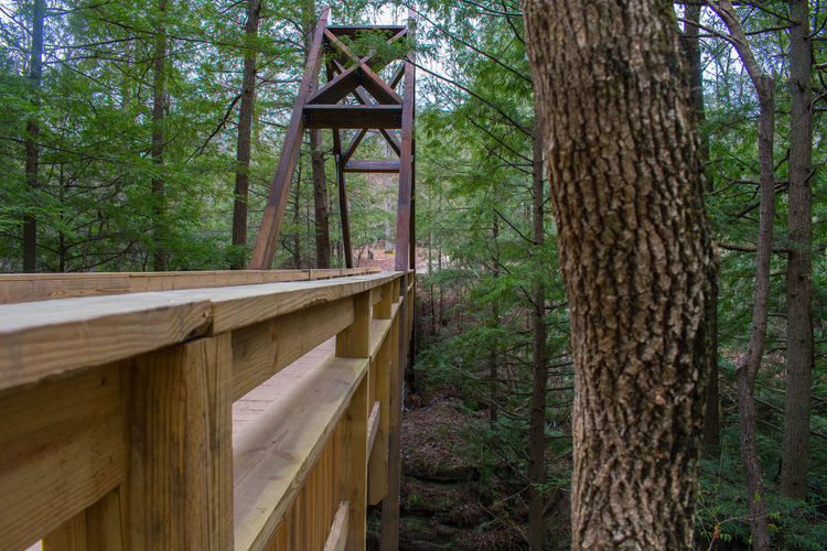Architecture Beauty In Nature Day Forest Growth Hocking Hills Hocking Hills Ohio,Old Mans Cave Hocking Hills State Park Lush - Description Nature No People Outdoors Tranquility Tree Tree Trunk Wood - Material Wood And Metal Brig Wood Bridge WoodLand EyeEmNewHere