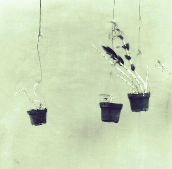 Orchid Orchid Plants 🌱 Flower White Black Sephia Photo
