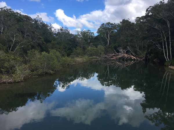 Blue Sky Bush Cloud - Sky Day Growth Landscape Nature No People Outdoors Reflection River Sky Tree Water
