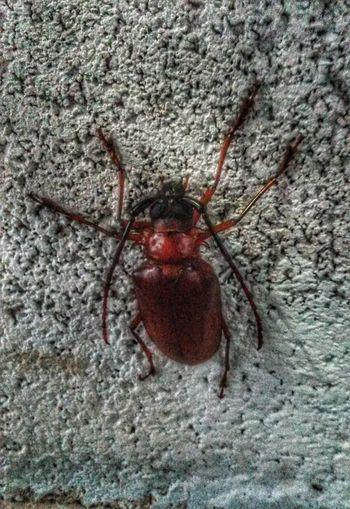 ชนบทโฟโต้ชู้ท วิถีชีวิตคนไทย แมลง