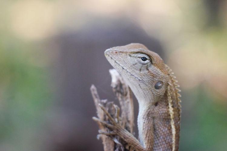 Animais Nature Forest Reptile Wildlife Wildlife & Nature Lizard Disguise