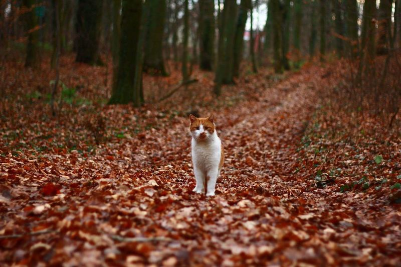 Cat Standing In A Forest