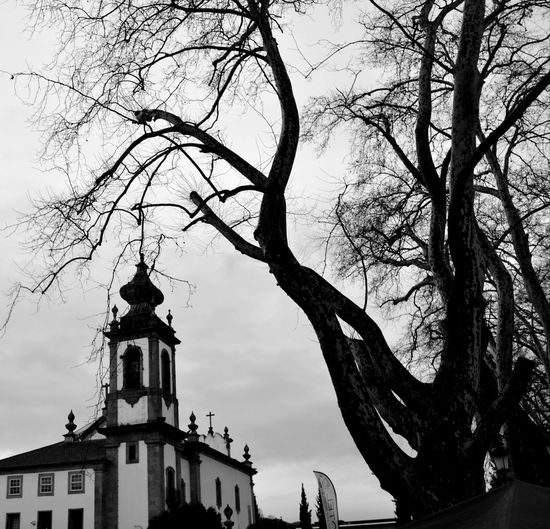 pray for absolution Portugalbnw Igers Igersportugal Bnwsouls Bnw_of_our_world Bnw Bnw_globe Bnwpics Bnwphotography Bnw_magazine Bnw_captures Bnw_city Bnw_of_the_world Weshareportugal Photography Bnw_mood Bnw_top Tree Low Angle View Branch Bare Tree Building Exterior Architecture Outdoors Statue Silhouette Day Built Structure City No People Sky