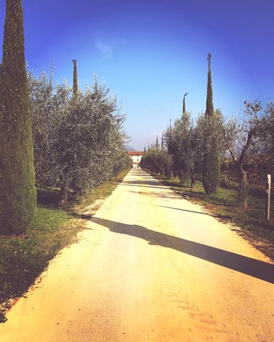 Love Valpolicella Italy Verona Outdoors Day Nature Sky Road Landscape Tranquility Tranquil Scene Beauty In Nature Tree Streetphotography Holiday