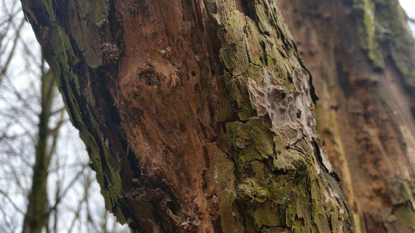 Tree Bark Texture Tree Bark Greenery WoodLand Manchester Tree Bark Patterns Tree Trees Forest Tree Bark Wood