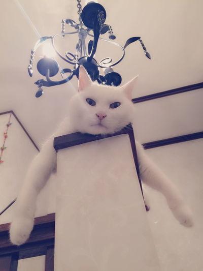 何やってんの? Cat Cute Cats Relaxing Enjoying Life