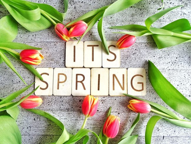It's spring Words Wooden Letters Springtime Spring Tulips Text Western Script Flower Communication Leaf Message Freshness No People Nature Alphabet Green Color Day Beauty In Nature Fragility Flower Head
