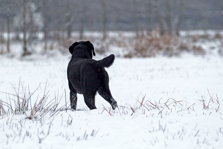 Black dog on field during winter
