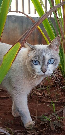 Cat Tina! Lookmyeyes Cats Of EyeEm Nature Animal Eye Cat