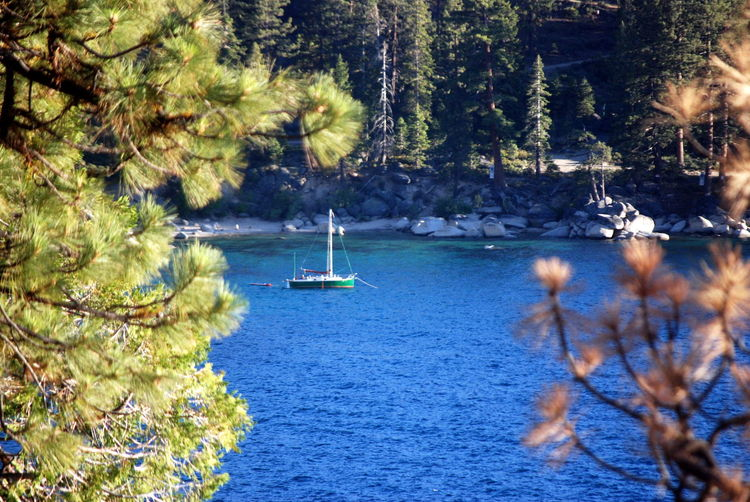 Tree Beauty In Nature Growth Water Nature Tranquility Tranquil Scene Outdoors Scenics Transportation Day Tahoe Lake Pirates Cove Sky Nevada Sights Lake Tahoe, Nv Beautiful Day