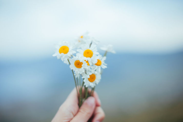 Cropped image of hand holding flowers