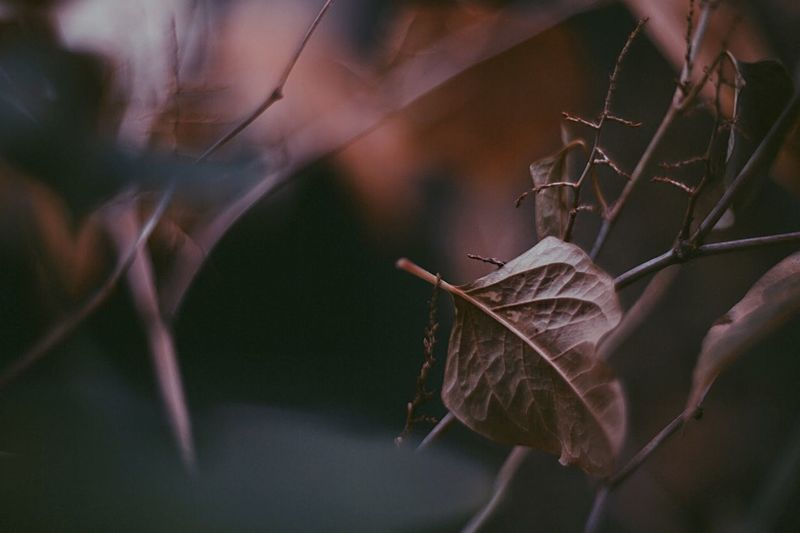 Moody Moody Nature Bokeh Photography Leaf Plant Close-up Nature Beauty In Nature Vulnerability