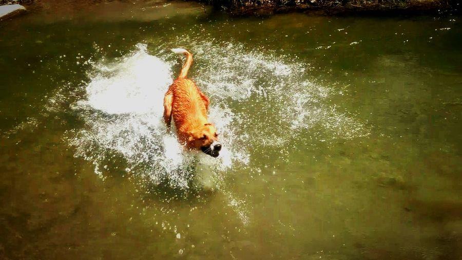 Taking Photos Enjoying Life Ilovemydog Dog River Dog Love