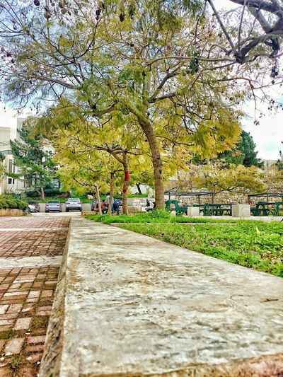 Nature Trees Parking Perspective University Paving Concrete Green Grass