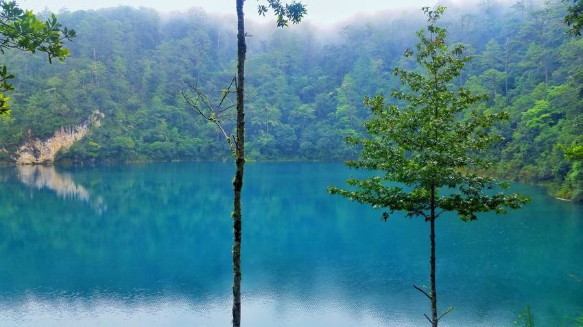 Reflection Water Nature Mountain Beauty In Nature Tree Forest No People Bluewater Trees And Nature Lake Chiapas, México Chiapasvivemexico ChiapasMyLove Chiapasmexico Chiapas Tours Day Outdoors Scenics Sky