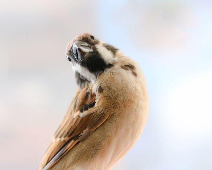 素直な疑問符 Bird Sparrow One Animal Soft Focus Animal Themes Animal Close-up Cute Animals EyeEm Animal Lover Happy Poetic Day Moment Life
