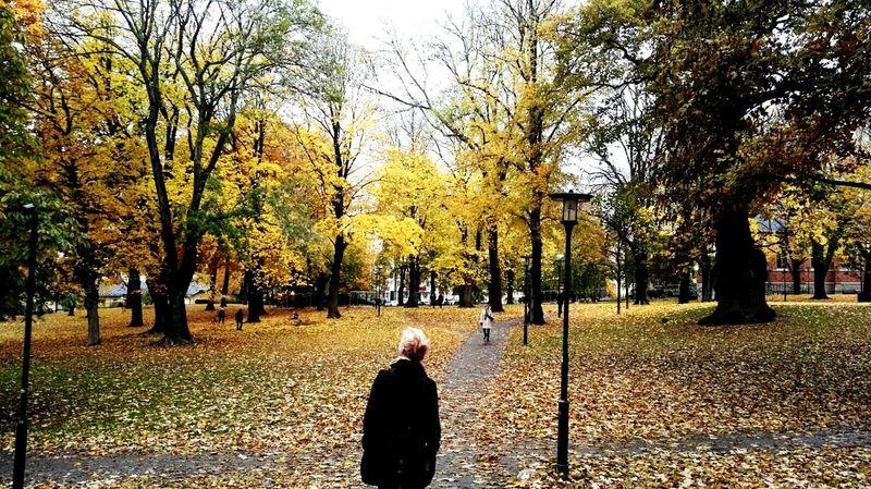 Autumn Deep Sweeden Stockholm