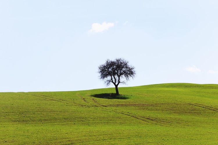 Plant Tree Sky Landscape Land Tranquil Scene Field Environment Tranquility Beauty In Nature Scenics - Nature Growth Green Color Nature Rural Scene Single Tree Agriculture No People Grass Day