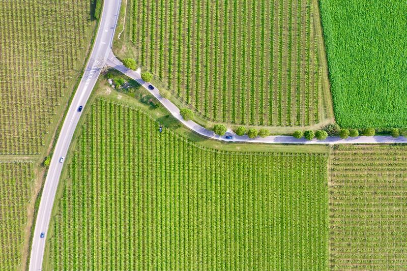 Italy, Verona: Valpolicella wineyards Drone  Green Color Agriculture Plant Land Nature No People Growth Field Wineyard Valpolicella Drone Photography From Above  High Angle View Looking Down Pattern Textured  Full Frame Crop  Backgrounds Parallel Lines Lines Landscape Springtime Day Daylight Daytime Geometry Horizontal Italy Verona Repetition Nature Outdoors Nobody Viniculture Environment Shades Of Green  In A Row Side By Side Order Abundance Rural Scene Aerial View Column Road Country Road Curve Intersection Transportation Tranquility
