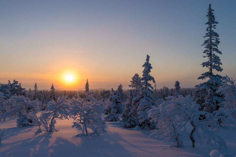 Amazing sunset light in Riisitunturi National park, Finland 2017 Amazing Art Beauty In Nature Beauty In Nature Cold Temperature Finland Forest Getty Images Landscape Mountain Nature Nature Nikon No People Outdoors Photography Pine Tree Scenics Sky Snow Sun Sunlight Sunset Tree Winter
