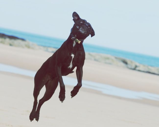Dog jumping at beach against sky