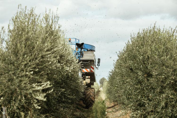 Olive harvester machine