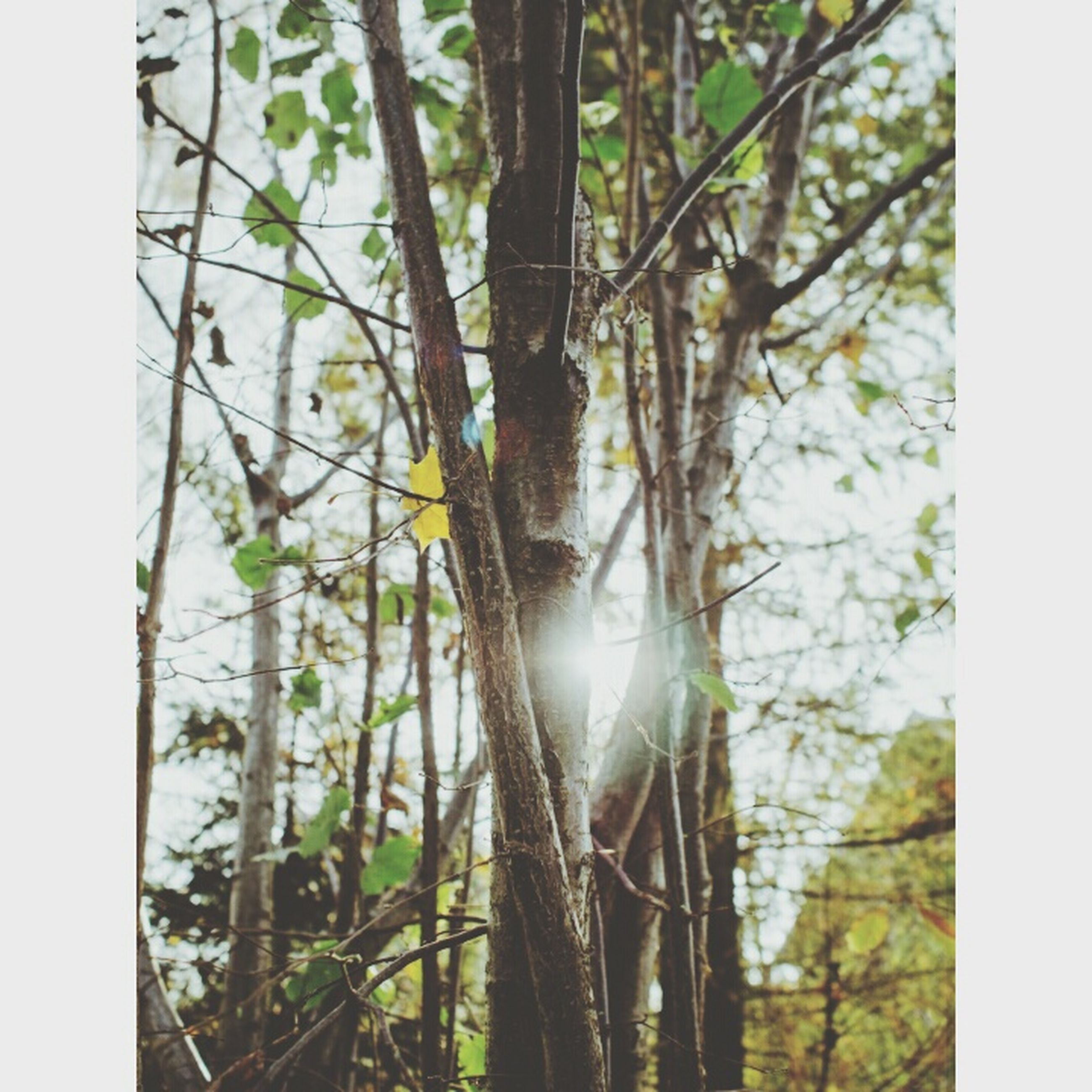 tree, transfer print, growth, tree trunk, auto post production filter, tranquility, branch, nature, forest, beauty in nature, plant, green color, day, sunlight, tranquil scene, scenics, outdoors, leaf, no people, water
