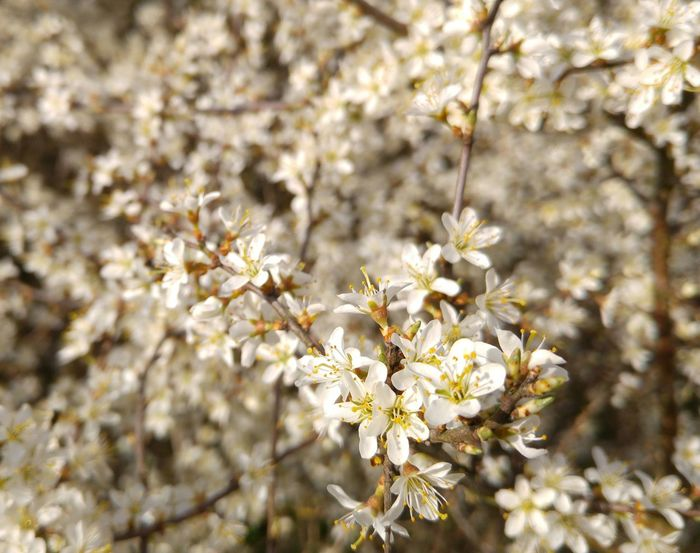Spring Springtime Spring 2016 Frühlingsfarbe Frühling 2016 🌾 Frühlingsgefühle Frühlingserwachen Frühlingsanfang Blumenzauber