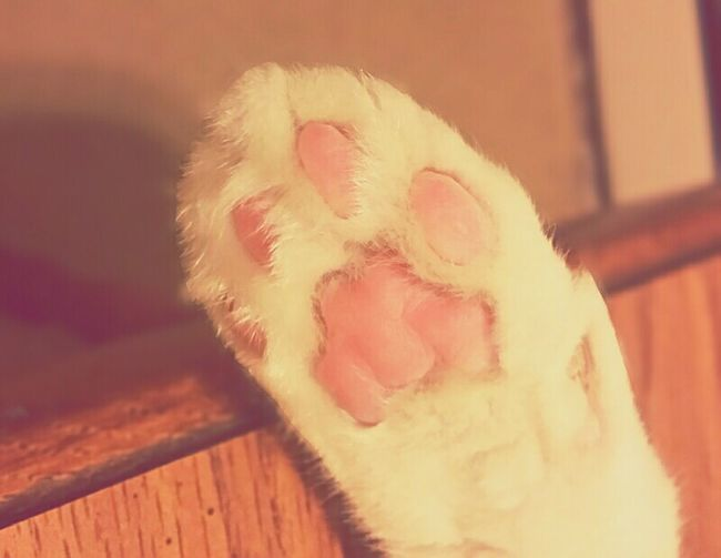 Talktothepaw Raiseyourpaws Cute♡ Pink Soft Adorable Touchme..? Loveanimals❤️ Pet Therapy