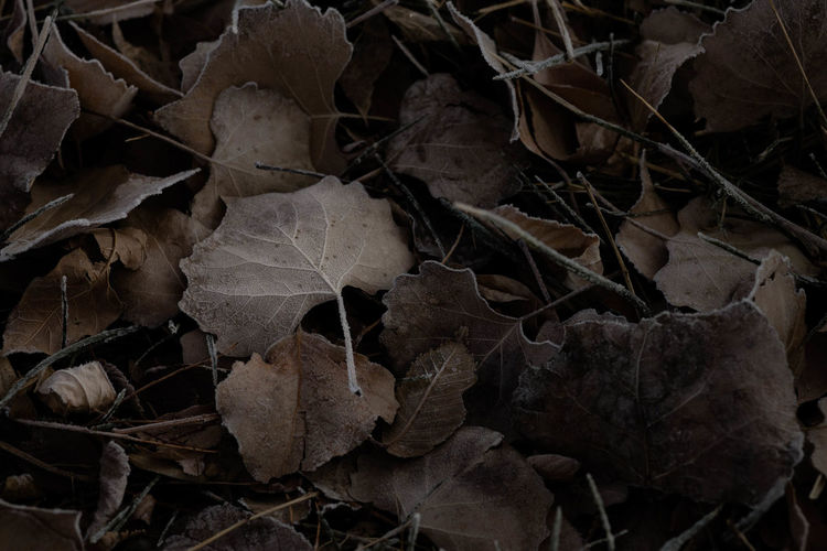 Dead Leaves Winter Gloomy Cold Moody Backgrounds Full Frame Textured  Nature No People Winter Stack