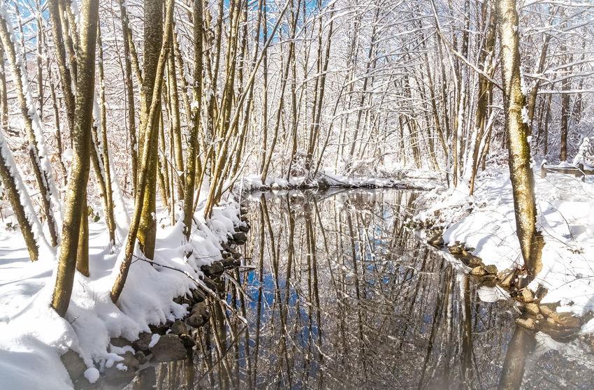 #beautifulbc #bestplaceever #birchtree #nopeople #PeacefulMoment #reflectionsinthecreek #snowybank #Solitude #sunnydayins #supernaturalBC
