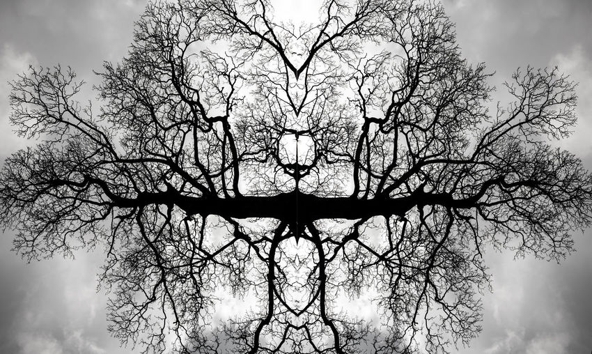 Nature's Lungs.