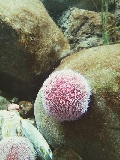 Sea life First Eyeem Photo