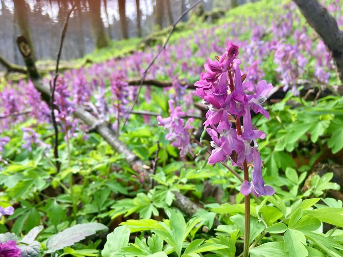 Pink & green Nature Flower Growth Freshness Purple Beauty In Nature Plant Leaf Fragility Blooming Day No People Outdoors Close-up Lilac
