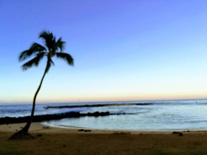 Palm tree on Poipu Beach Hawaii Sunset Beach Sky Sea Land Water Palm Tree Tropical Climate Beauty In Nature Tree Scenics - Nature Tranquility Nature No People Outdoors Horizon Horizon Over Water
