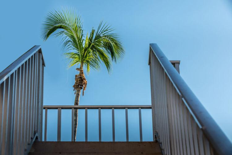 Low angle view of railings and palm tree against clear blue sky