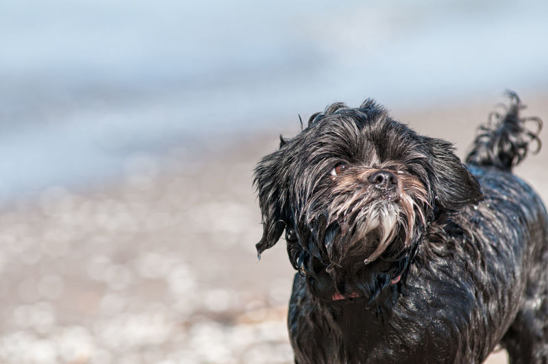 Close-Up Of Dog At Beach