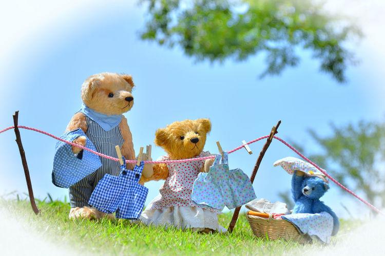 Teddy bear's
