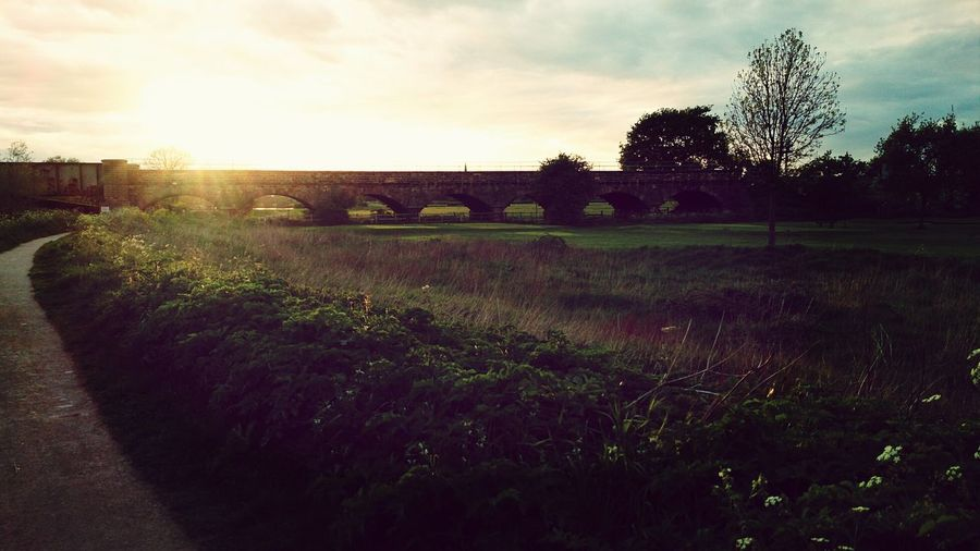Bridge Sunshine ☀ Beautiful ♥ Nature Walk