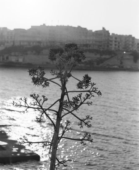 Analogue Photography Film Ilford HP5 Plus Malta Mamiya RB67 Tradition Gozo Ilford Lace Sekor C 180mm Textile